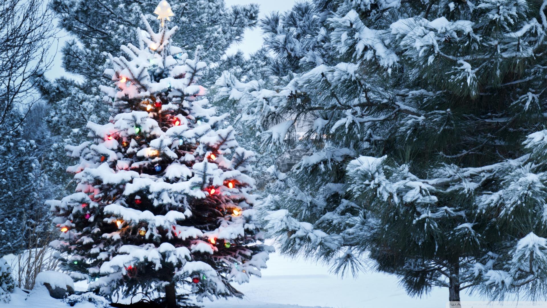 Frohe Weihnachten Ferienhaus Am Hofjagdweg