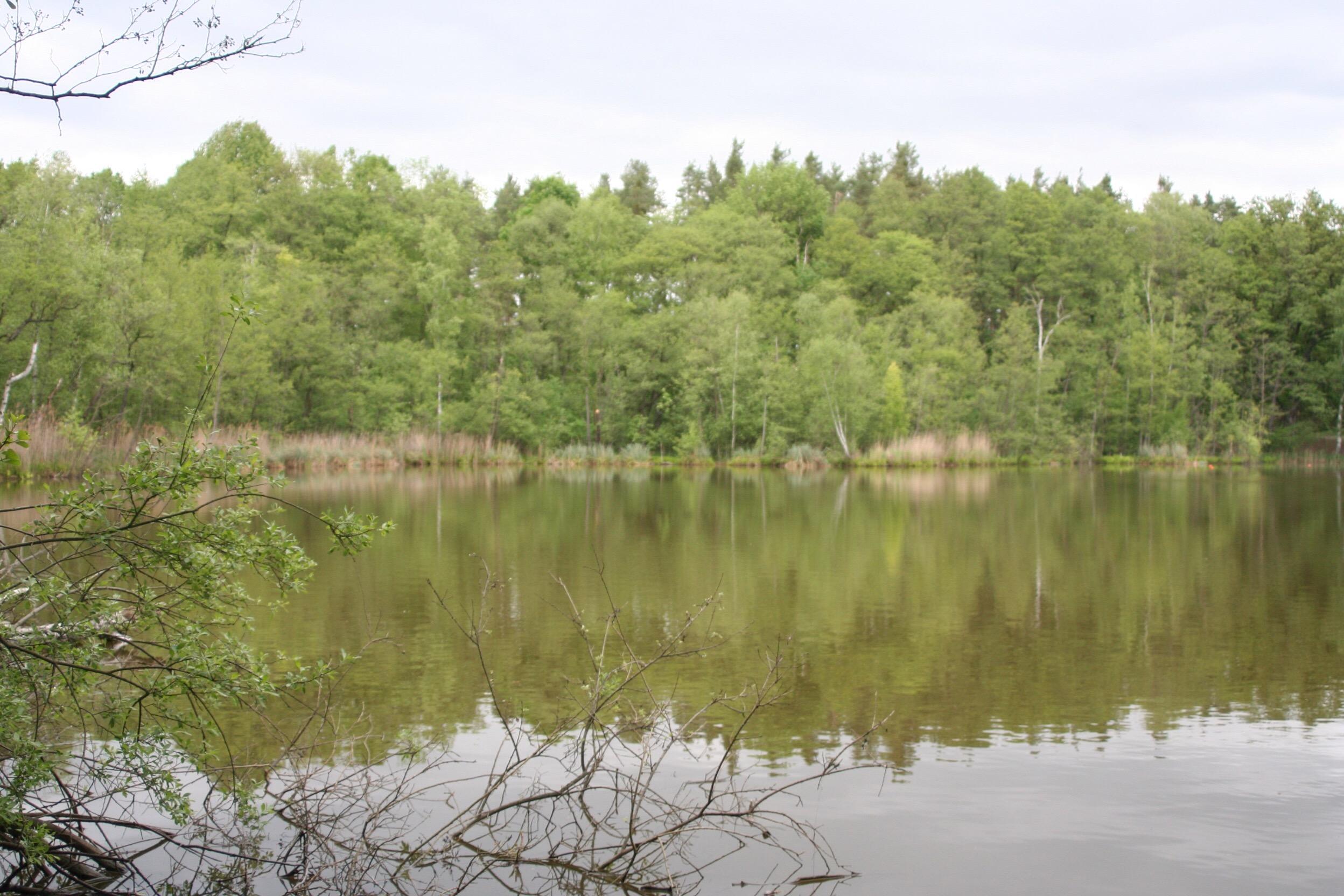 Waldsee bei Teupitz
